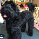 dog-grooming-bayside-melbourne-gallery-12