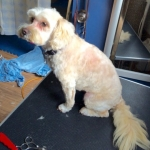 dog-grooming-bayside-melbourne-gallery-18