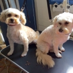 dog-grooming-bayside-melbourne-gallery-20