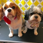dog-grooming-bayside-melbourne-gallery-21