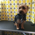 dog-grooming-bayside-melbourne-gallery-24