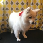 dog-grooming-bayside-melbourne-gallery-26