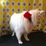 dog-grooming-bayside-melbourne-gallery-27
