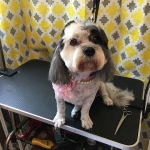 dog-grooming-bayside-melbourne-gallery-28