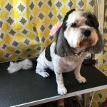 dog-grooming-bayside-melbourne-gallery-29