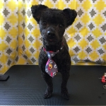 dog-grooming-bayside-melbourne-gallery-31