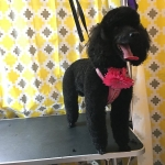dog-grooming-bayside-melbourne-gallery-34