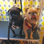 dog-grooming-bayside-melbourne-gallery-35