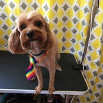 dog-grooming-bayside-melbourne-gallery-36