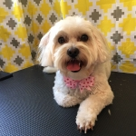 dog-grooming-bayside-melbourne-gallery-37