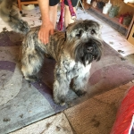 dog-grooming-bayside-melbourne-gallery-38