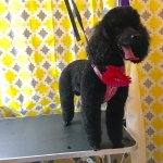 dog-grooming-bayside-melbourne-gallery-39