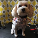 dog-grooming-bayside-melbourne-gallery-40