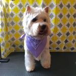 dog-grooming-bayside-melbourne-gallery-42