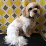 dog-grooming-bayside-melbourne-gallery-44