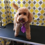 dog-grooming-bayside-melbourne-gallery-46