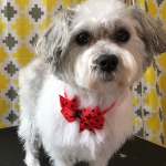 dog-grooming-bayside-melbourne-gallery-47