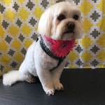 dog-grooming-bayside-melbourne-gallery-48
