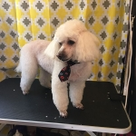dog-grooming-bayside-melbourne-gallery-49