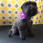 dog-grooming-bayside-melbourne-gallery-52