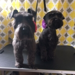 dog-grooming-bayside-melbourne-gallery-53