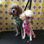 dog-grooming-bayside-melbourne-gallery-54