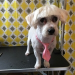 dog-grooming-bayside-melbourne-gallery-55