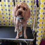 dog-grooming-bayside-melbourne-gallery-56