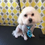 dog-grooming-bayside-melbourne-gallery-57