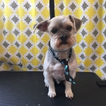 dog-grooming-bayside-melbourne-gallery-58