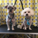 dog-grooming-bayside-melbourne-gallery-59