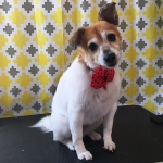 dog-grooming-bayside-melbourne-gallery-60