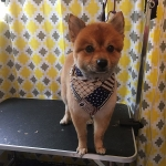 dog-grooming-bayside-melbourne-gallery-61
