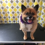 dog-grooming-bayside-melbourne-gallery-62