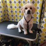 dog-grooming-bayside-melbourne-gallery-65