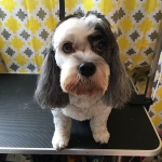dog-grooming-bayside-melbourne-gallery-66