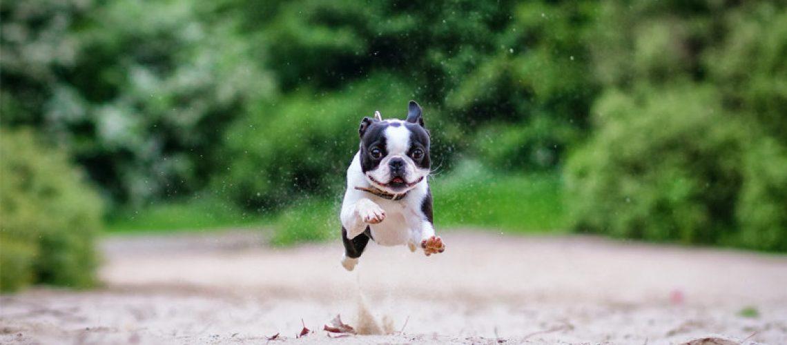 puppyrun